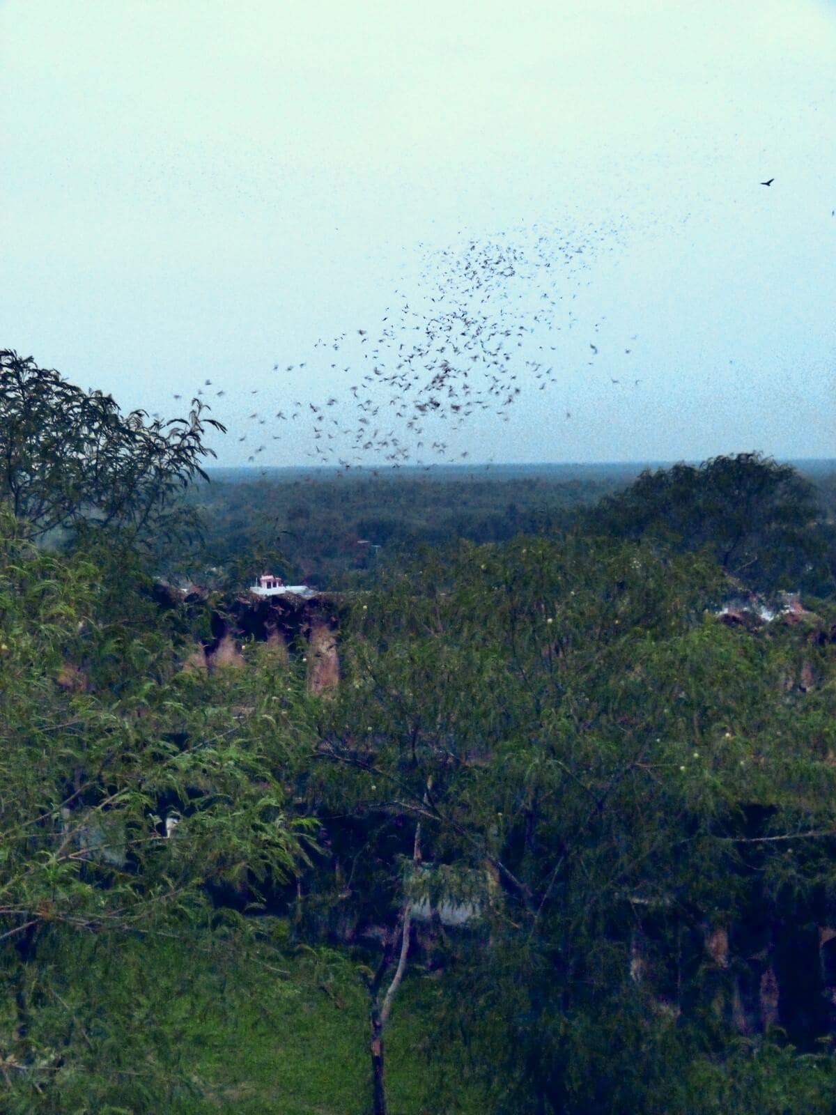 Bats Ahoy! at Daikola Fort